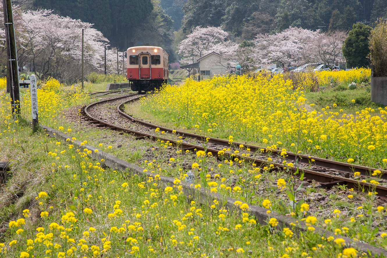 090407小湊鉄道-0123