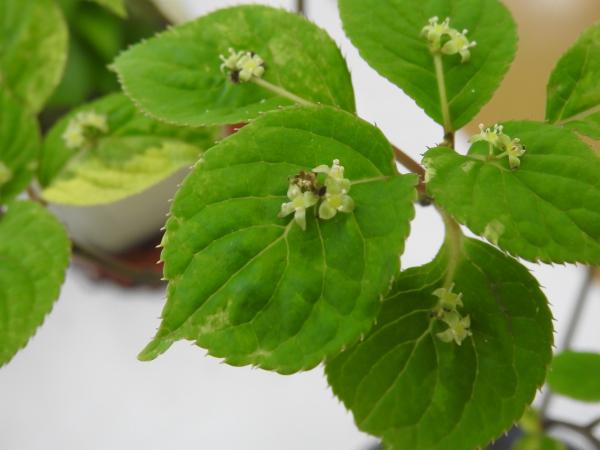 180430茨城県立植物園_003