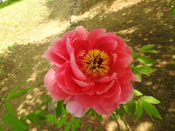 180430茨城県立植物園_005