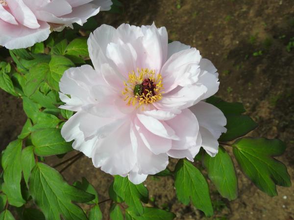 180430茨城県立植物園_006