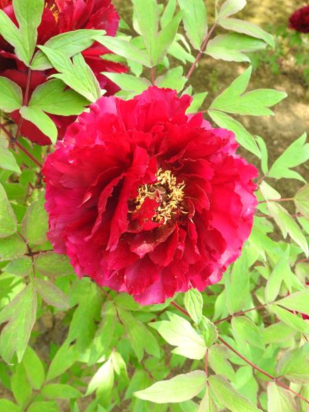 180430茨城県立植物園_009