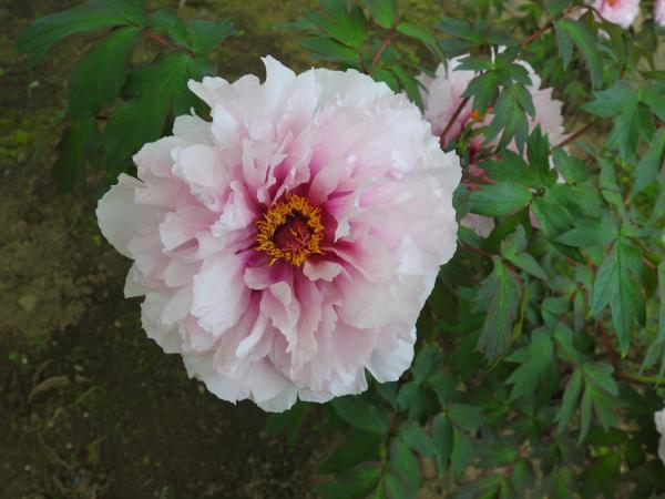 180430茨城県立植物園_010