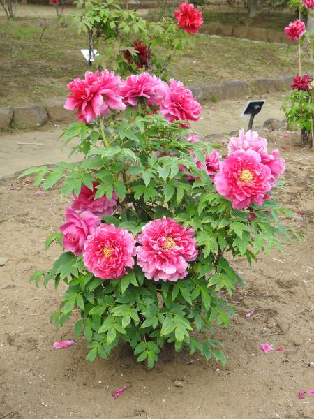 180430茨城県立植物園_011