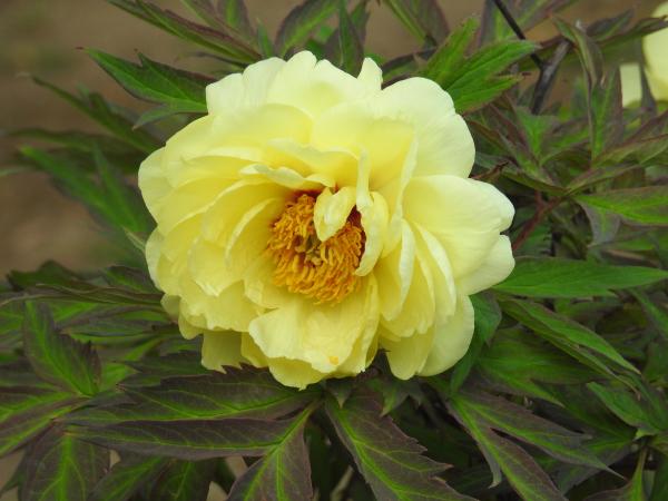 180430茨城県立植物園_012