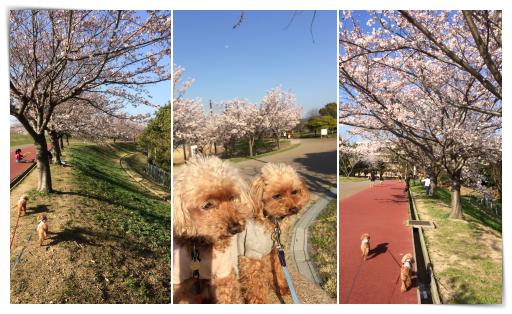 2018健康公園散歩3
