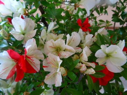 緑花の泉DSC05811