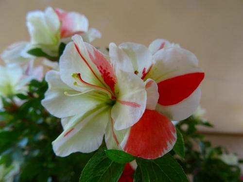 緑花の泉DSC05812