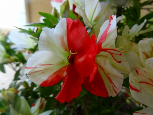 緑花の泉DSC05813