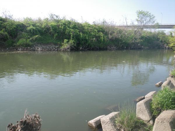 伊自良川最下流