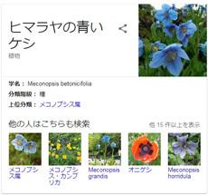 flowerMotif170-03.jpg