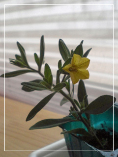 flowerMotif171-07.jpg