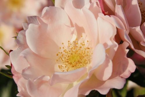 バラの種類がとても多くて・・・撮りきれない