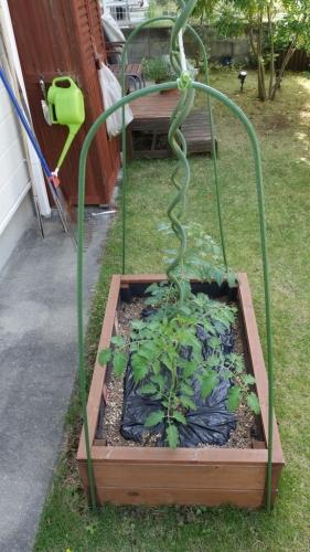 トマト 螺旋 支柱