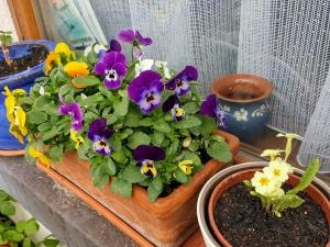 flowerinmycottages0418