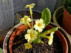 flowerinmycottages04184
