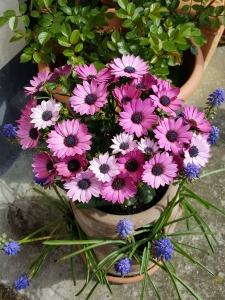flowerinmycottages04183