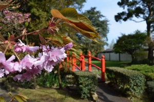 Japanesegardenkildare3