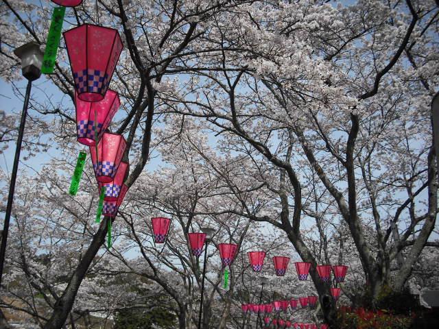 桜ぼんぼり2