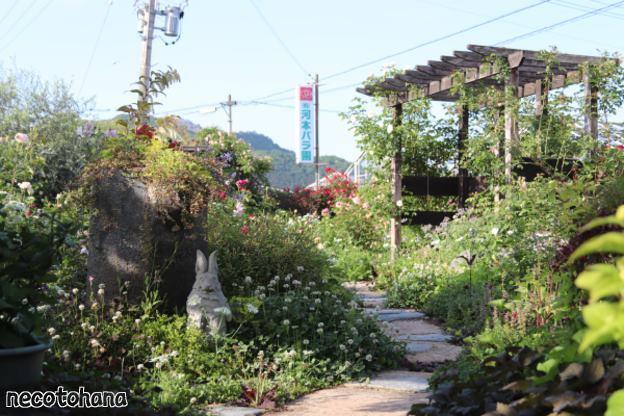 IMG_0786 河本バラ園のお庭