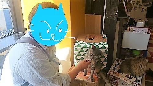 シマ男20180426