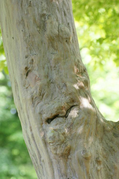 201205のおじさんの木