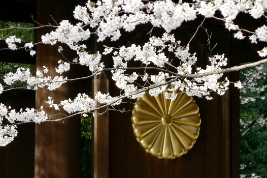 20180419 靖国神社と桜