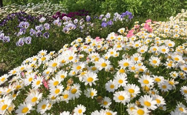 20180514 5月の花