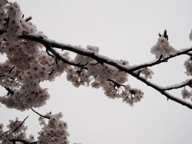 雪がかぶり
