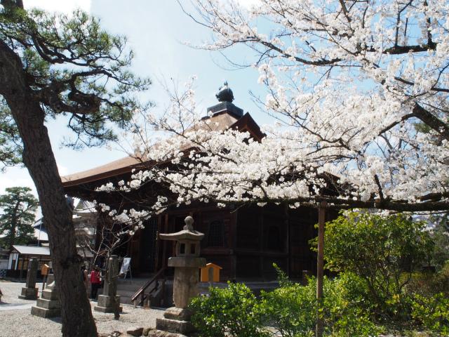 経蔵と桜にズーム