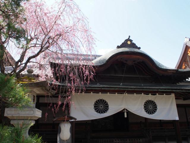 大本願の枝垂桜