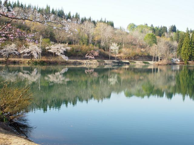 鏡ヶ池と桜