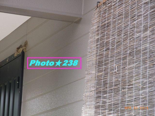 0430燕の巣