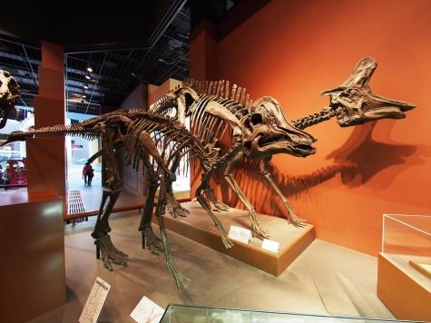 恐竜【ミュージアムパーク茨城県自然博物館】