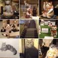 猫都の国宝展2