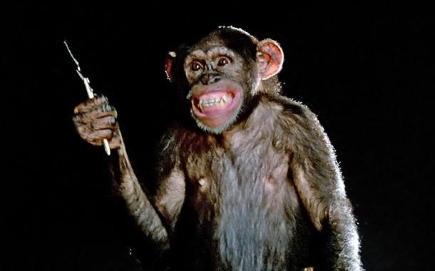 chimp-phenomena.jpg
