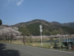 13:19 桜