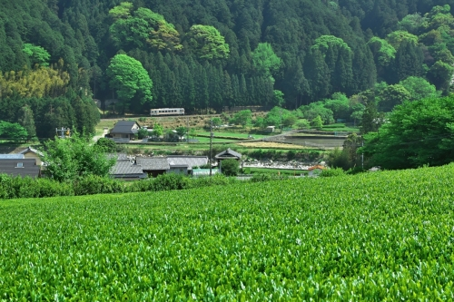 IMG_6548名松線