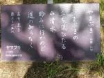 s4yamabuki.jpg