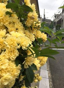 20182月の渋谷の路地1