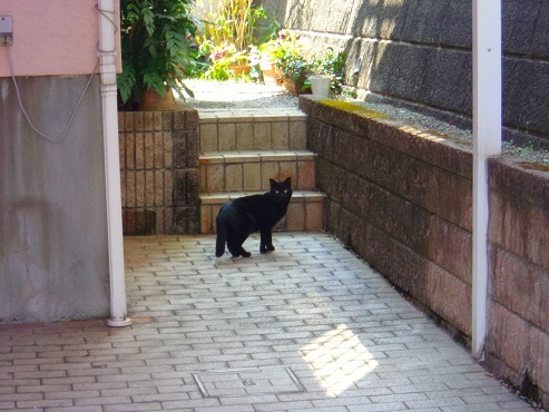 通りすがりに見かけた猫(774)