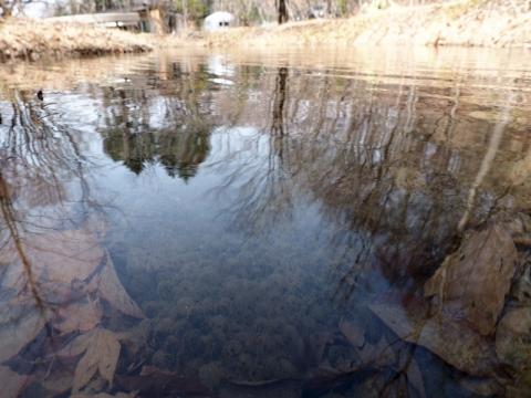 ケラ池ヤマアカ卵180329