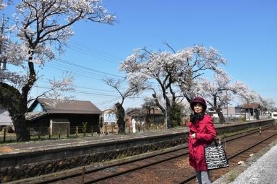 桜と記念ショット  黒子駅