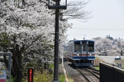 大宝駅の桜