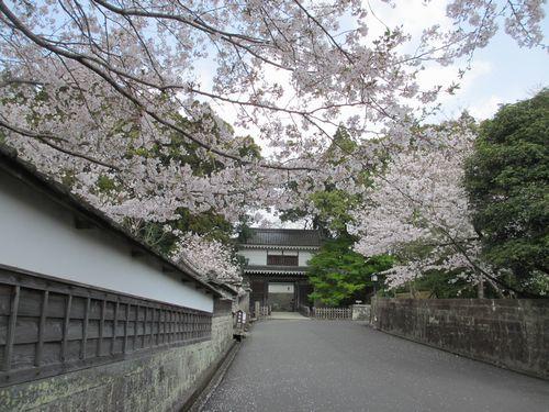 IMG_7395大手門桜満開