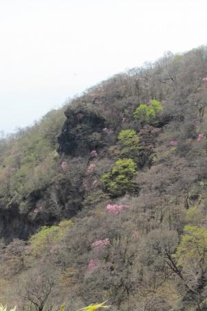 180505長七郎山~おとぎの森 (30)s