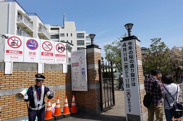 20180414 造幣局 桜の通り抜け (3)