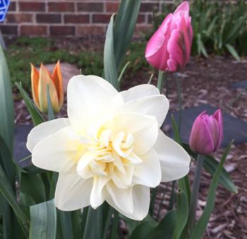 flowers05171805.jpg