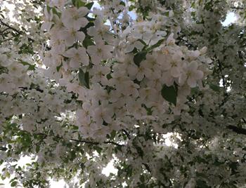 flowers05171806.jpg