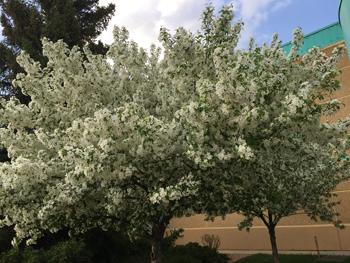 flowers05171807.jpg