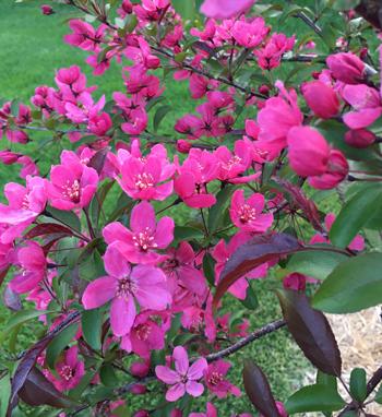 flowers05171809.jpg